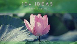 10+ Ideas para Tiestos